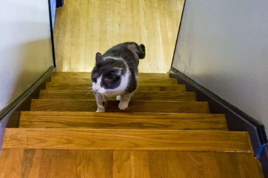 Here I am learning how to come up the steps. I can do this! I can do this! I just wish it were as easy as going down!